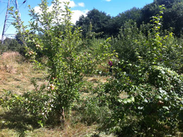 Siding s orchard gets some tlc tree loving care heaton mersey conservation group - Spring trimming orchard trees healthy ...